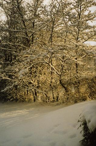 Winter photo