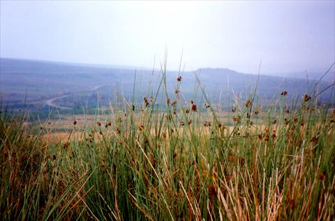 Grass and landscape